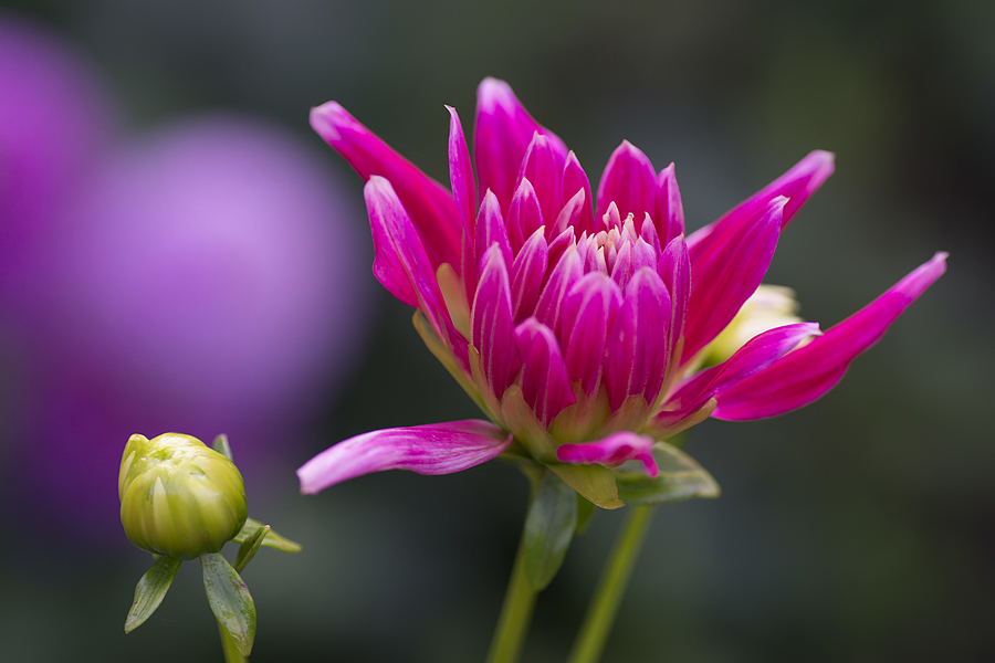 Pink Flower | LENS MODEL NOT SET <br> Click image for more details, Click <b>X</b> on top right of image to close