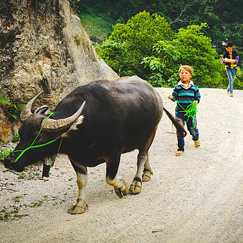 The little boy and the big buffalo | LENS MODEL NOT SET