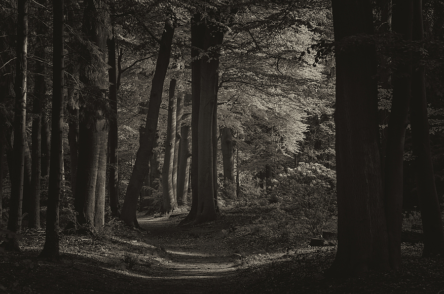Forest | ZEISS PLANAR F1.4 85MM <br> Click image for more details, Click <b>X</b> on top right of image to close