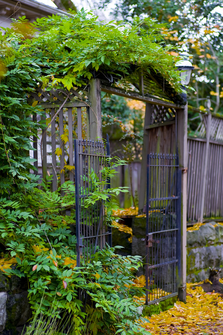 Doorway to a secret garden | ZEISS PLANAR F1.4 85MM <br> Click image for more details, Click <b>X</b> on top right of image to close