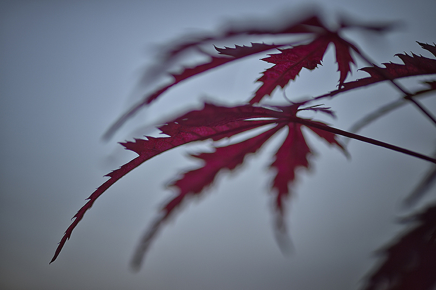 Autumn | ZEISS MAKRO PLANAR F2.0 100MM <br> Click image for more details, Click <b>X</b> on top right of image to close