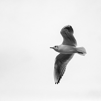Sea Gull | ZEISS MAKRO PLANAR F2.0 100MM
