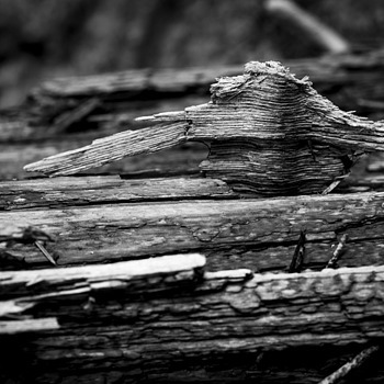 Wood | ZEISS MAKRO PLANAR F2.0 100MM <br> Click image for more details, Click <b>X</b> on top right of image to close
