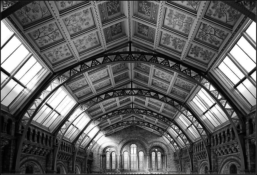 Ceiling, Natural History Museum, London | ZEISS DISTAGON F2.8 21MM <br> Click image for more details, Click <b>X</b> on top right of image to close