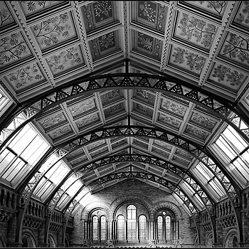 Ceiling, Natural History Museum, London