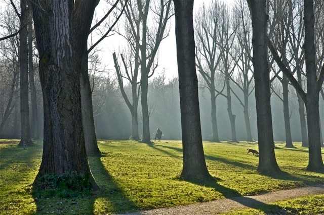 Amsterdamse bos | ZEISS ZA VARIO-SONNAR DT F3.5-F4.5 16-80MM <br> Click image for more details, Click <b>X</b> on top right of image to close