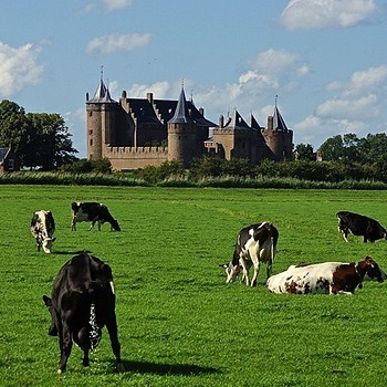 Castel and cattle, Muiderslot, Muiden | LENS MODEL NOT SET <br> Click image for more details, Click <b>X</b> on top right of image to close