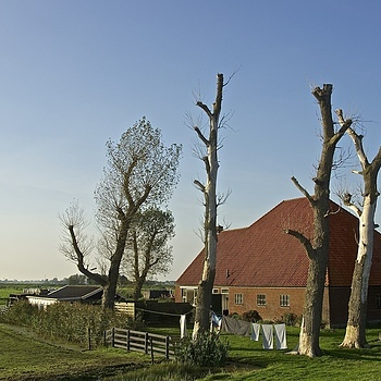 Dutch landscape. Farm | LENS MODEL NOT SET <br> Click image for more details, Click <b>X</b> on top right of image to close