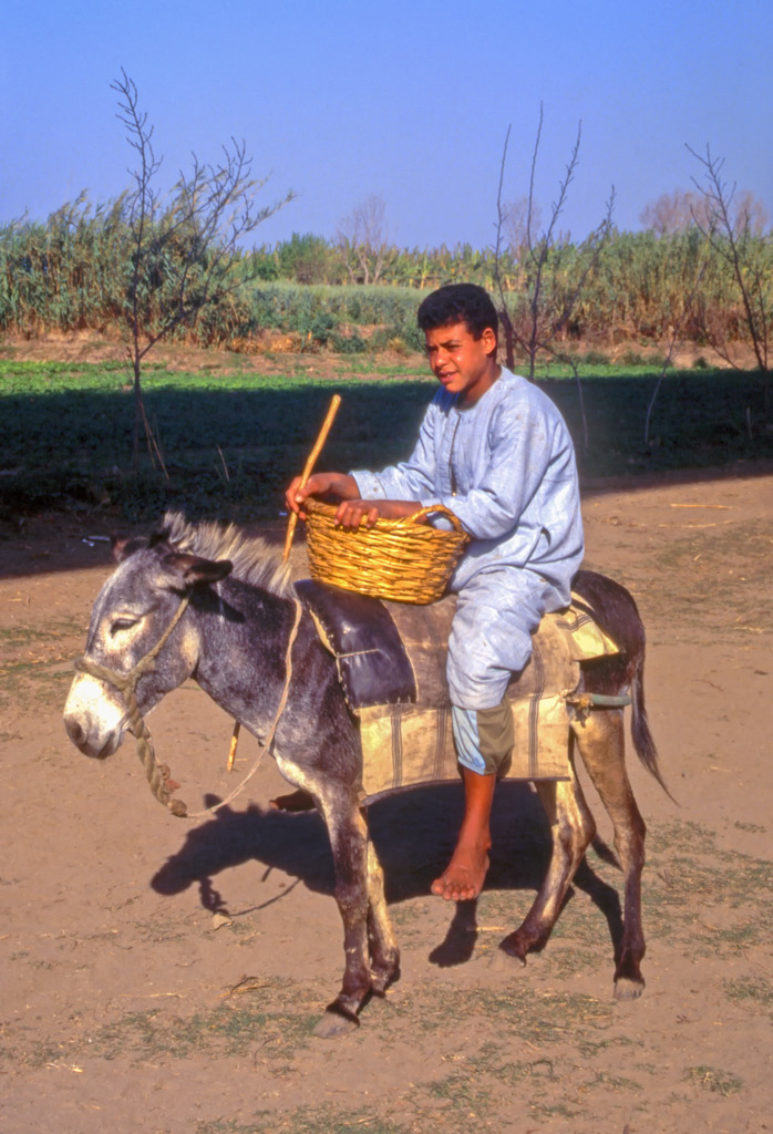 Off to market ! Menouf, Nile Delta, Egypt - 1991 | ZEISS CY PLANAR 85MM F1.4 <br> Click image for more details, Click <b>X</b> on top right of image to close