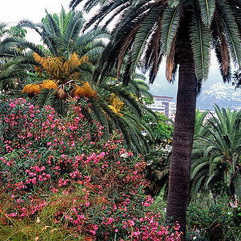 Garden of Reid's Hotel, Funchal, Madeira | LENS MODEL NOT SET <br> Click image for more details, Click <b>X</b> on top right of image to close