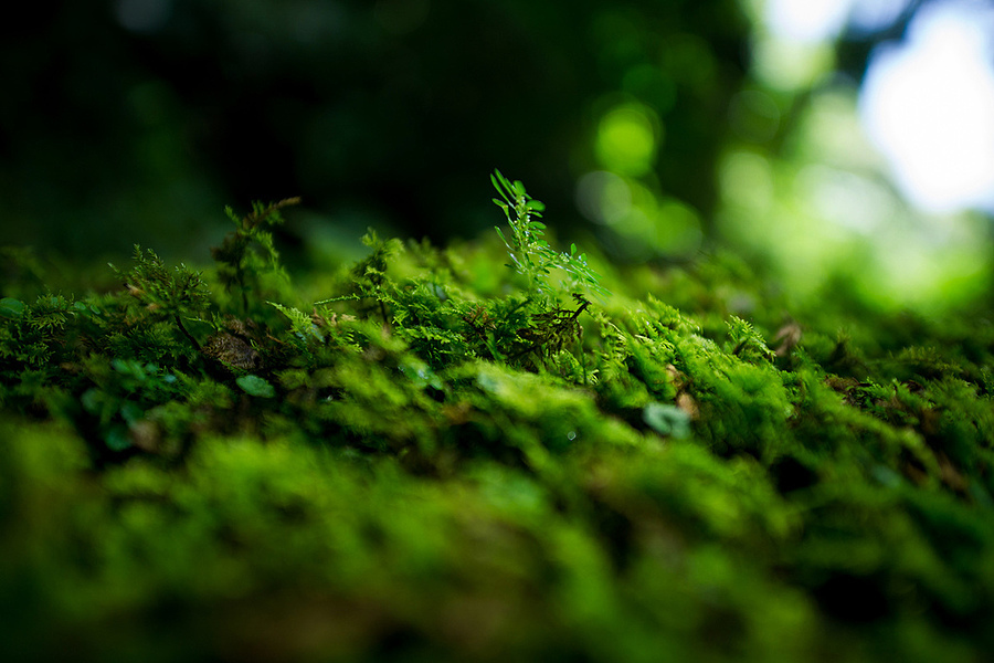 a small mini forest... | ZEISS ZA DISTAGON 24MM F2.0 <br> Click image for more details, Click <b>X</b> on top right of image to close