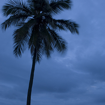 coconut tree | ZEISS DISTAGON F2.8 25MM <br> Click image for more details, Click <b>X</b> on top right of image to close