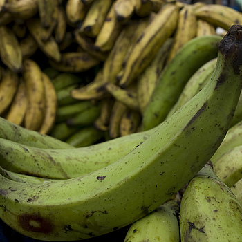 platanos | ZEISS DISTAGON F2.8 25MM <br> Click image for more details, Click <b>X</b> on top right of image to close