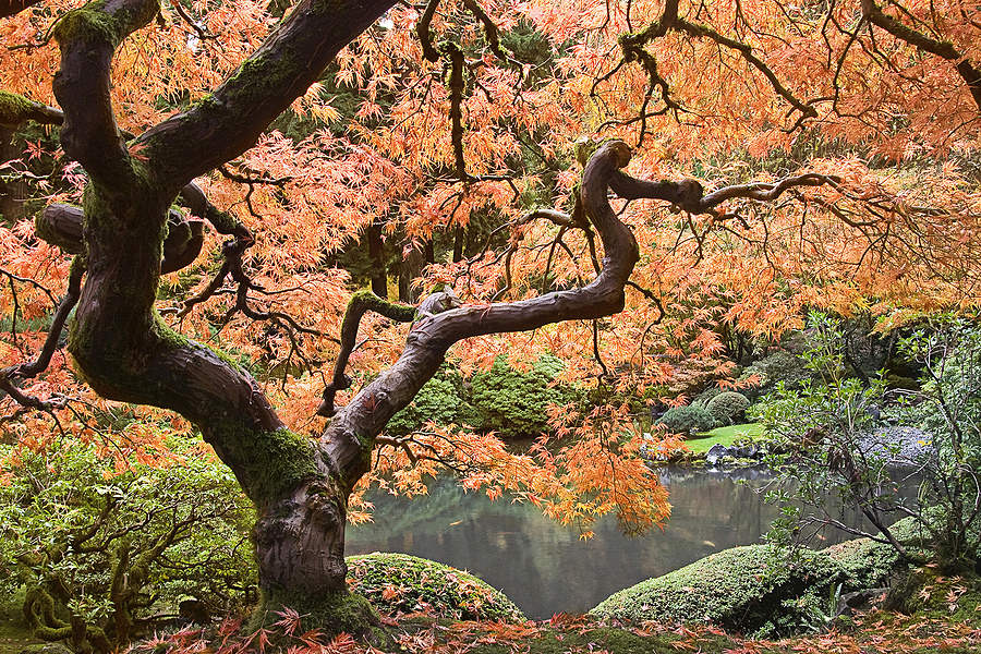 Japanese Garden, Portland Oregon | LENS MODEL NOT SET <br> Click image for more details, Click <b>X</b> on top right of image to close
