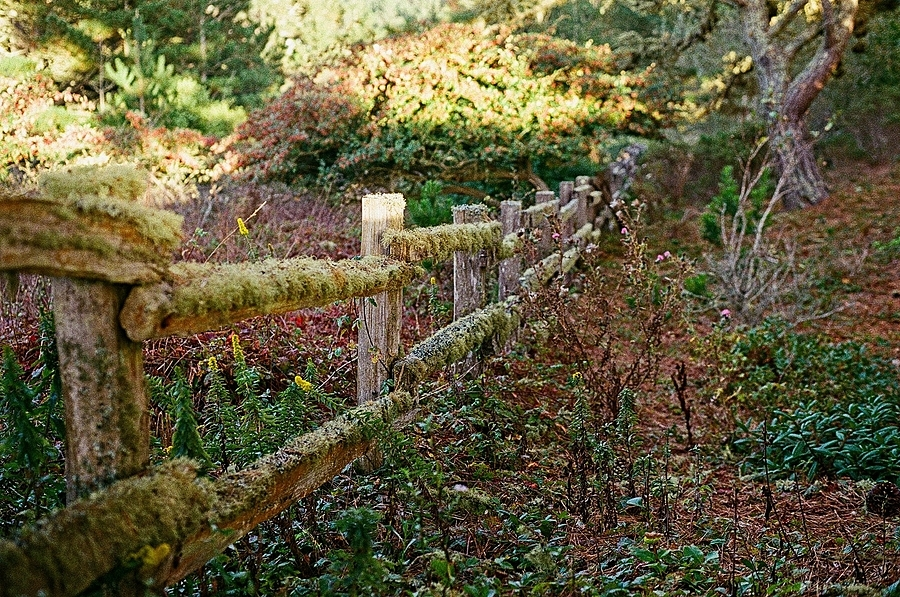 Fence | ZEISS PLANAR F1.4 50MM <br> Click image for more details, Click <b>X</b> on top right of image to close
